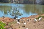 Gölet ve Sevimli Hayvanlar