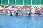 Havuzumuz ve Şezlonglarımız
