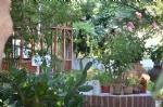 Bahçemizde Kamelya